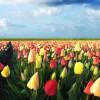 Come trovare lavoro in Olanda