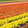 Trasferirsi all'estero: perché scegliere l'Olanda?